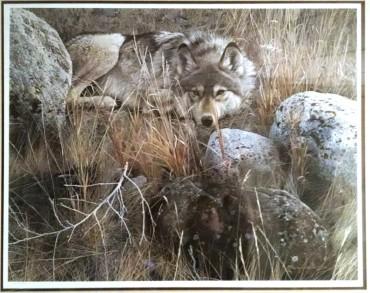 wolf_2b