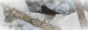 bird on branch winter
