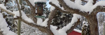 winter header junco